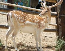 Reserva Animal La Pequeña África