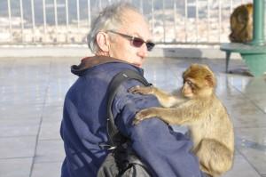 Gibraltar monkey experience