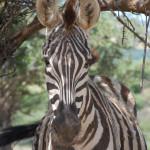 Reserva Animal La Pequena Africa