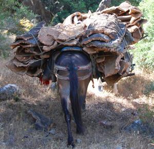 cork harvest